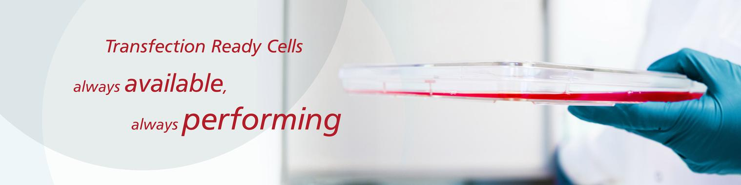 Transfection ready cells banner
